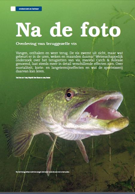 catch & release effecten op gedrag en welzijn van snoek esox lucius onder water