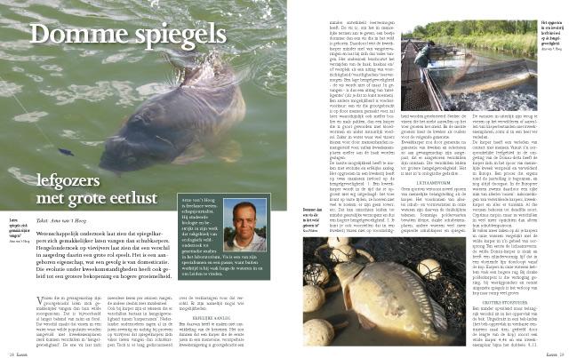Karper Cyprinus carpio Spiegelkarper Schubkarper visonderzoek domesticatie