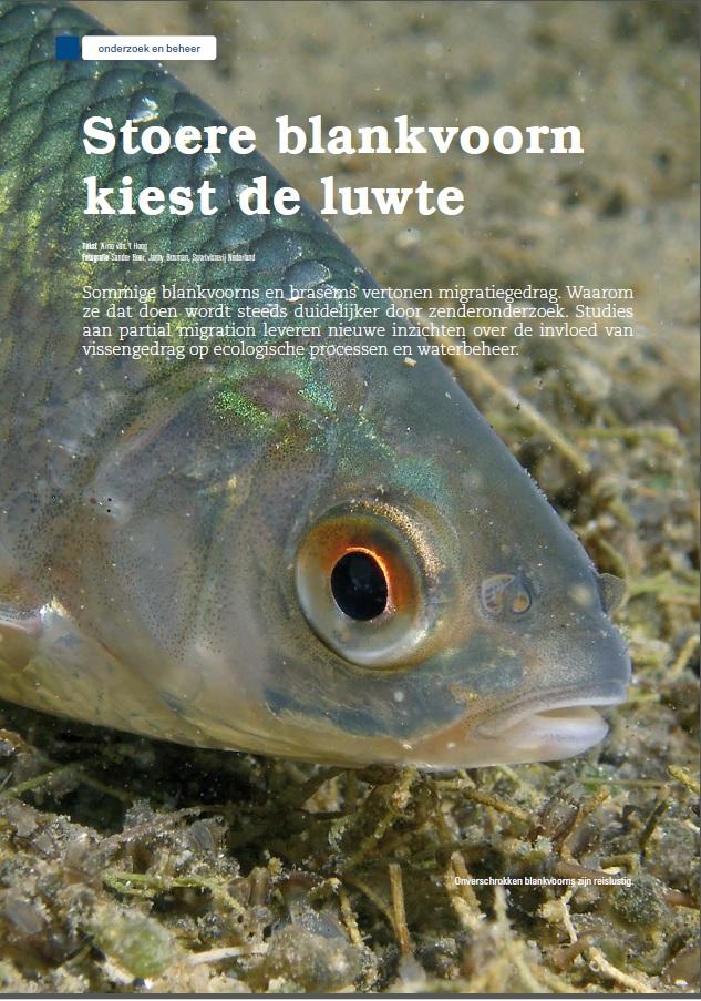 Witvis Partial Migration Wintertrek Blankvoorn en Brasem