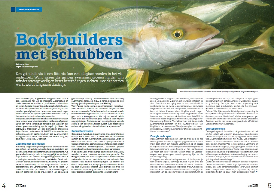 Yellowtail Kingfish Bodybuilders met schubben
