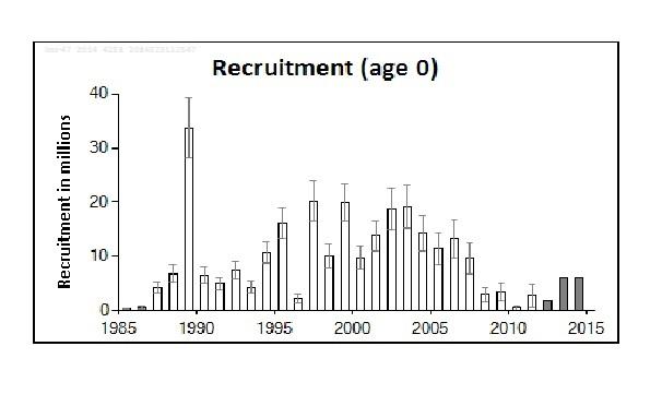 Recruitment Dicentrarchus labrax zeebaars sea bass
