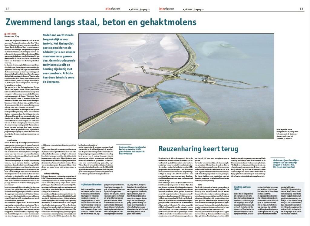 Vismigratie Trekvis Zalm Fint Elft Haringvliet Afsluitdijk