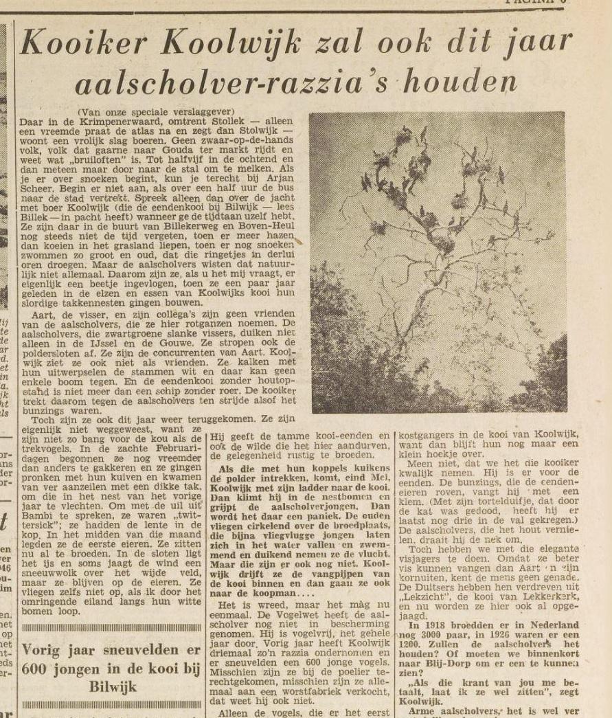 Aalscholver-razzia's in de krant Bron Het Vrije Volk 5 maart 1949 via Delpher